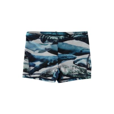 Molo Norton Whales